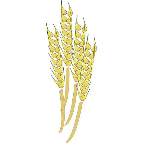 wheat clip grains clipart wheat bundle pencil and in color grains