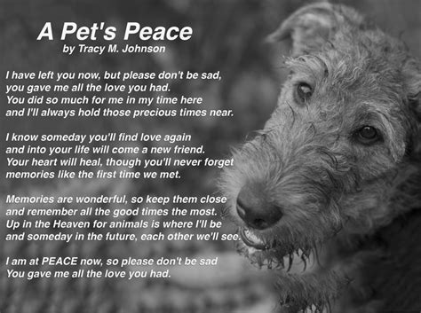 comforting words for loss of a pet former silent majority care2 groups
