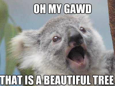 Meme Generator Koala - angry koala baby meme generator