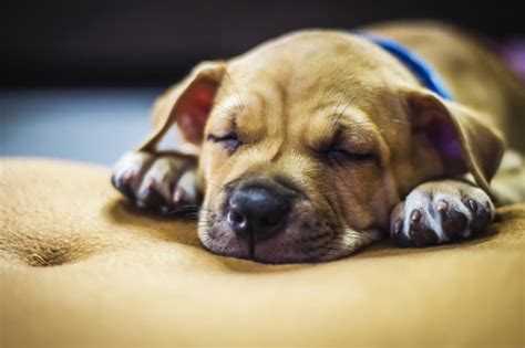 puppy sleeping a lot 4 month should you try to keep your puppy awake during the day so they sleep at