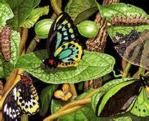 casa delle farfalle marittima parchi divertimento e parchi tematici sulla riviera