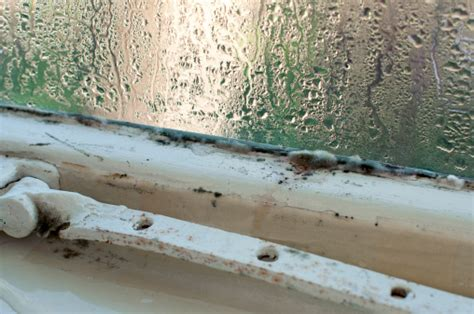 mold mites in bathroom how to deal with a mouldy student house the national