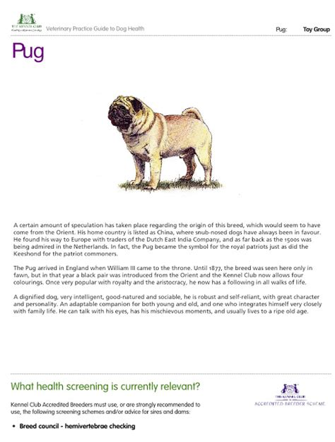 pug encephalitis pedigree dogs exposed the the other pde pug encephalitis breeds picture
