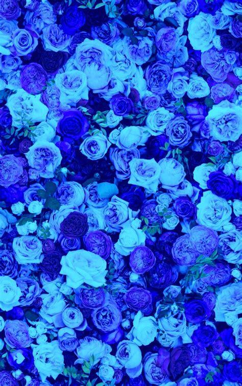 nature beautiful blue rose flowers iphone wallpaper