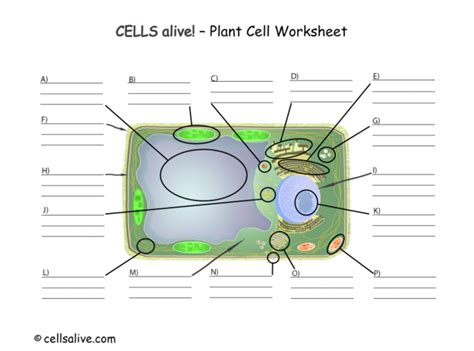 Cells Alive Mitosis Worksheet Answers by Cells Alive Worksheet Answers Worksheets Releaseboard