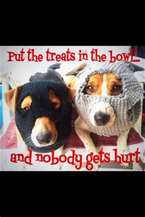 laugh wag  pinterest happy dogs funny german