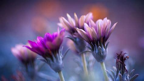 imagenes de flores wallpaper hd flores de co plantas fondos de pantalla hd fondos de