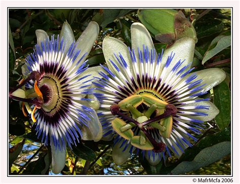 imagenes raras y bellas las 8 flores mas raras del mundo y mas ecolog 237 a taringa