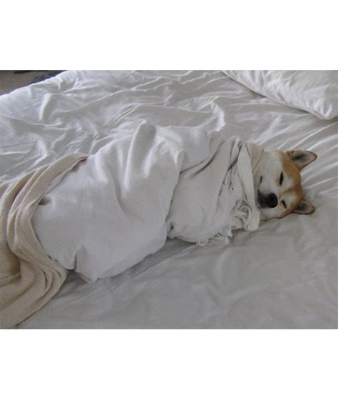 snug as a bug in a rug 17 dogs that need to sleep in your