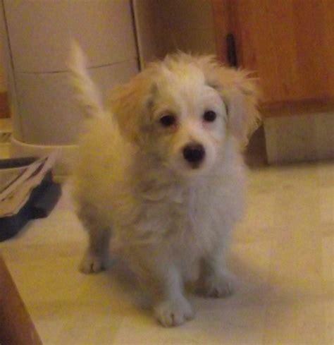 my new puppy my new puppy d cassidy86 photo 27345345 fanpop