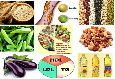 do healthy fats raise cholesterol cholesterol cholesterol reducing foods