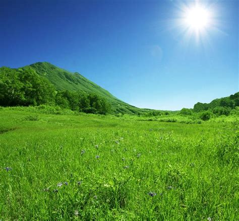 grassland biome animal facts and information