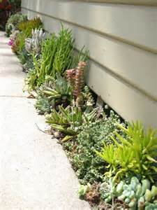 Succulent Gardens Ideas Top 10 Diy Outdoor Succulent Garden Ideas Top Inspired