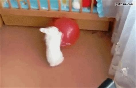 15 animals battling harmless things 15 gifs pleated