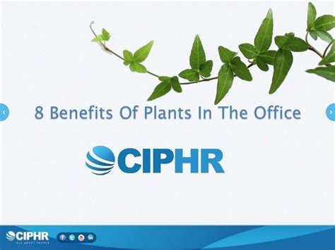 benefits of houseplants 8 benefits of plants in the office