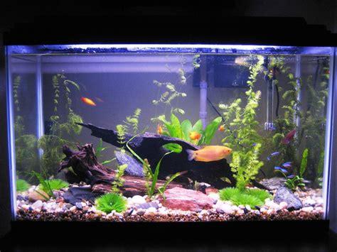 Aquarium Kinderzimmer Ideen by 39 Faszinierende Aquarium Einrichtungsbeispiele Und Tipps