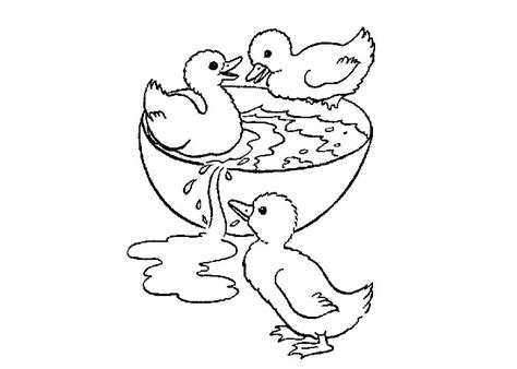 baby ducks coloring page free coloring pages of baby ducks
