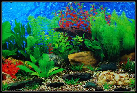 Backgrounds For Fish Tanks Printable Free Fish Tank Backgrounds Printable 10 Gallon Aquarium Backgrounds Printable 2017 Fish Tank