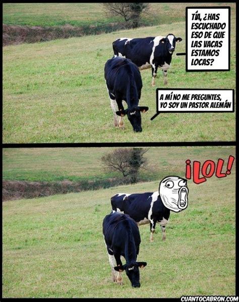 imagenes graciosas vacas cu 225 nto cabr 243 n la enfermedad de las vacas locas no afecta
