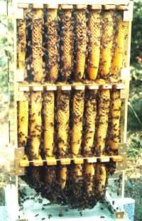 Top Bar Hive Plans Pdf Warre Hive