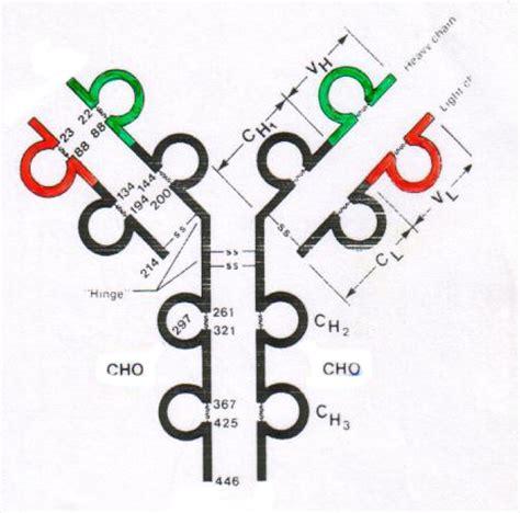 cadenas ligeras de inmunoglobulina en orina cadenas kappa de inmunoglobulina cadenas kappa de