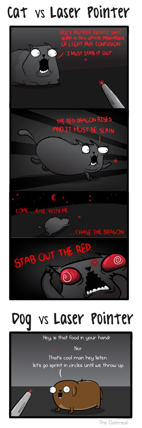dogs and laser pointers cat and versus laser pointer the oatmeal