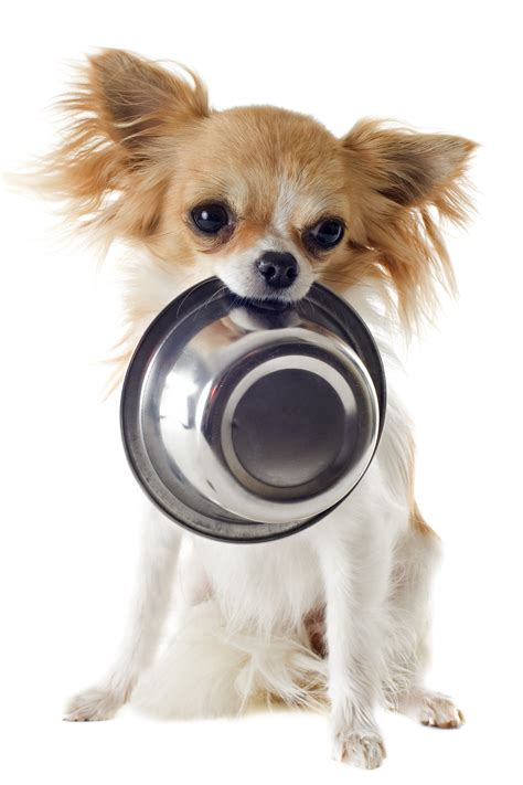 puppy nutrition food global pet foods
