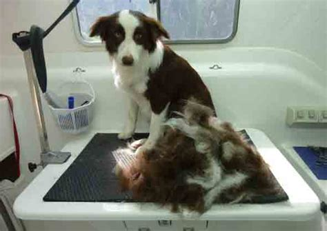 Dogs That Don T Shed Fur by Best House No Shed