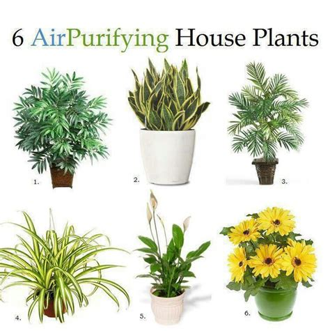 air purifying plants christmas wish list pinterest