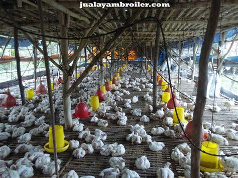 Jual Bibit Ayam Broiler Di Bekasi jual ayam broiler di pekayon jaya jual ayam broiler