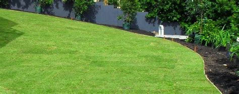 couch lawn care couch perth roll on lawn turf grass perth wa