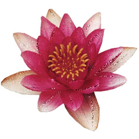 fiore gif ciao a tutti e virgilio forum