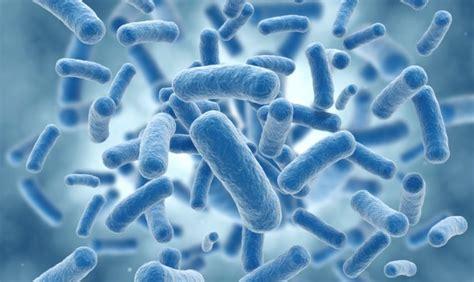 listeria monocytogenes alimenti listeriosi sintomi cause e rimedi tanta salute