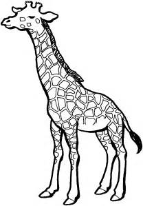 giraffe colors free giraffe coloring pages