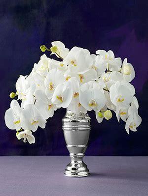 silver vase orchids vases sale