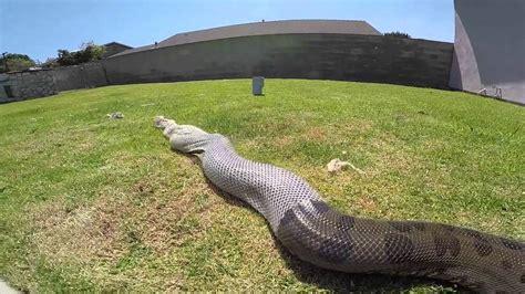 A Snake Shedding Its Skin by A Snake Shedding Its Skin Worklad