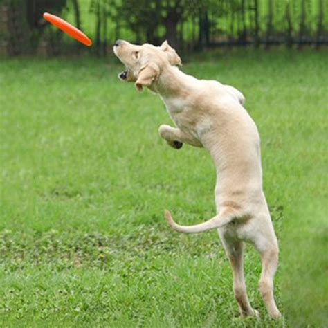 Silicone Pet Dog Frisbee Flying Disc Toy For Outdoor Large Backyard Toys For Dogs