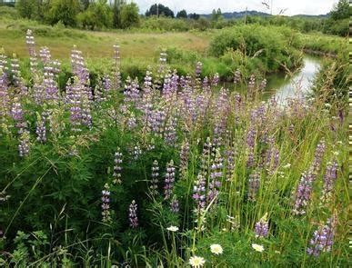 west eugene wetlands bureau of land management
