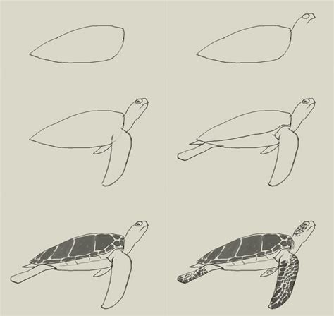How To Draw A Realistic Sea Turtle Step By Step turtle water drawing pencil and in color