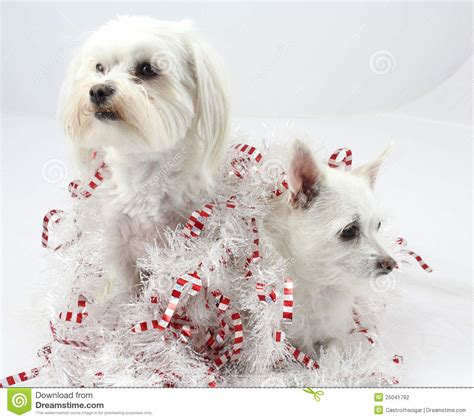 christmas dog decorations stock photo image of dogs