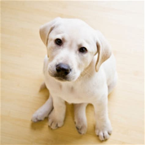 pet dogs images is your family ready for a pet what to expect