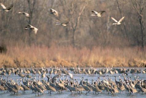 bird migration and migrations an encyclopedic primer