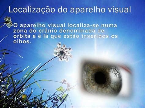 ee af omi anatomia e fisiologia do globo ocular