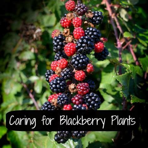 most difficult plants to grow 93 best images about todo frutas on pinterest trees