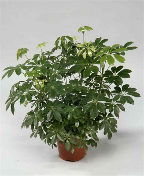 flowering house plants identification house plants identify by pic secret to healthy looking