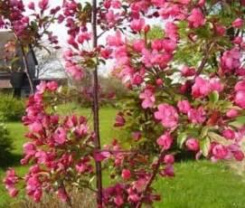 All Season Flower Garden An All Pink All Season Flower Garden Plan