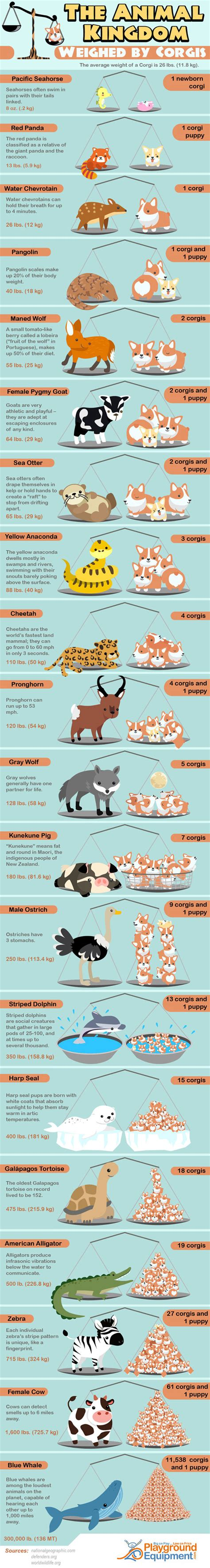 infographics animal kingdom 1848776543 the animal kingdom weighed by corgis best infographics