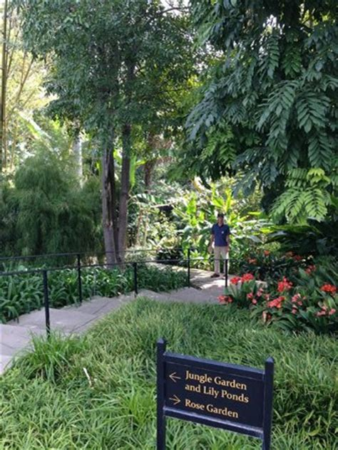 the huntington library collections and botanical gardens jungle garden at huntington library picture of the