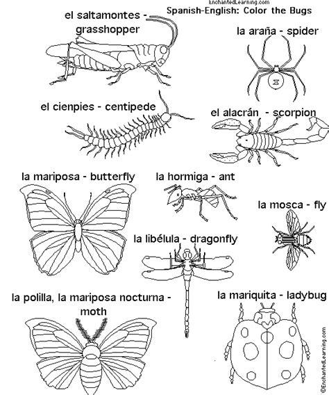 bed bug in spanish animals in spanish bugs enchantedlearning com