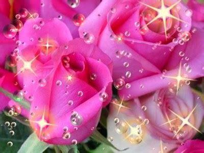 imagenes rosas brillantes hermosas regala rosas en movimiento san valentin